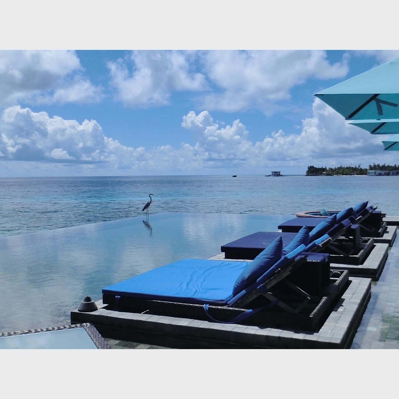 去马尔代夫jd岛度了蜜月