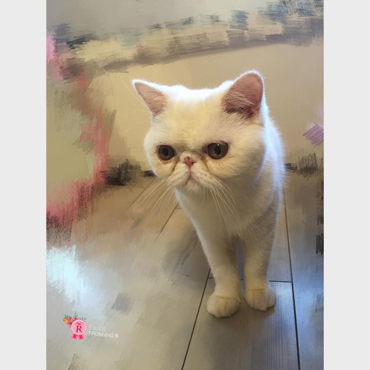 猫咪么么哒的可爱图片