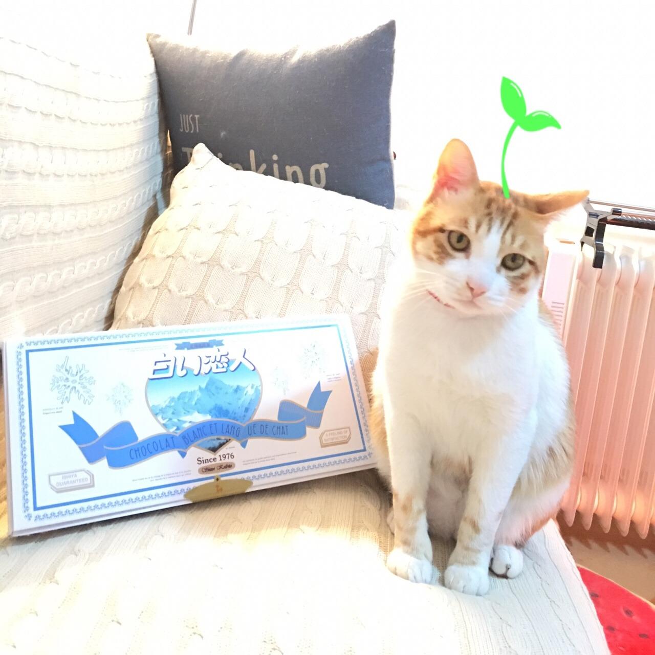 超可爱猫咪团子筒