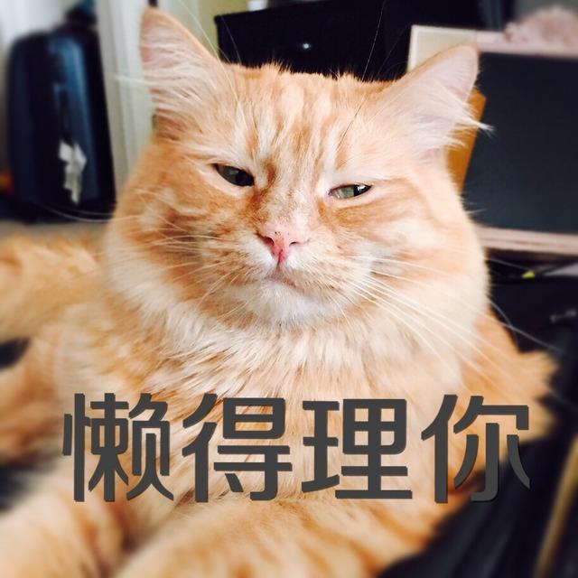 可爱小猫表情包