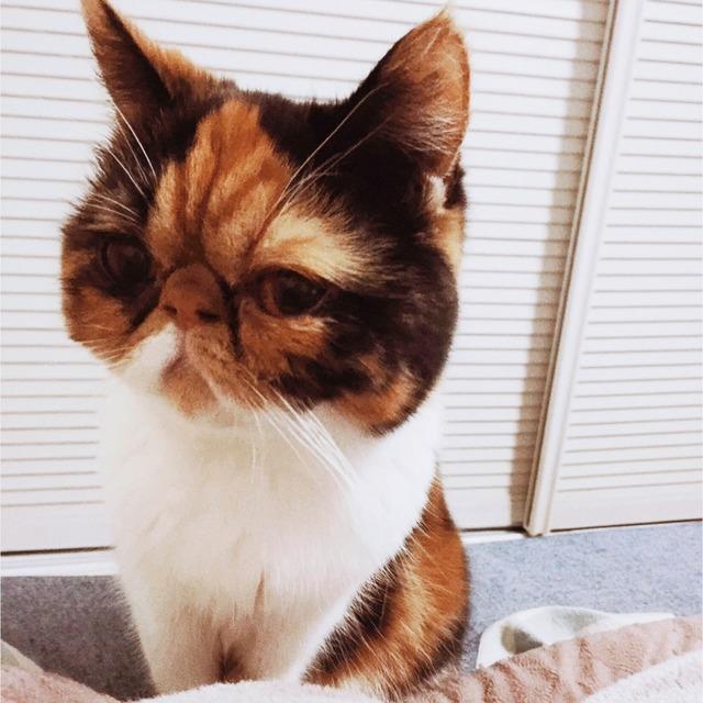 面包丝袜超人(作者) :  嗯嗯嗯 我自己家的猫哟 回复 看到她都焦人图片