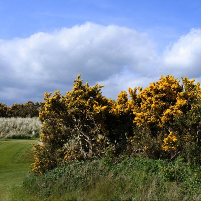 英国北爱尔兰皇家乡村高尔夫俱乐部