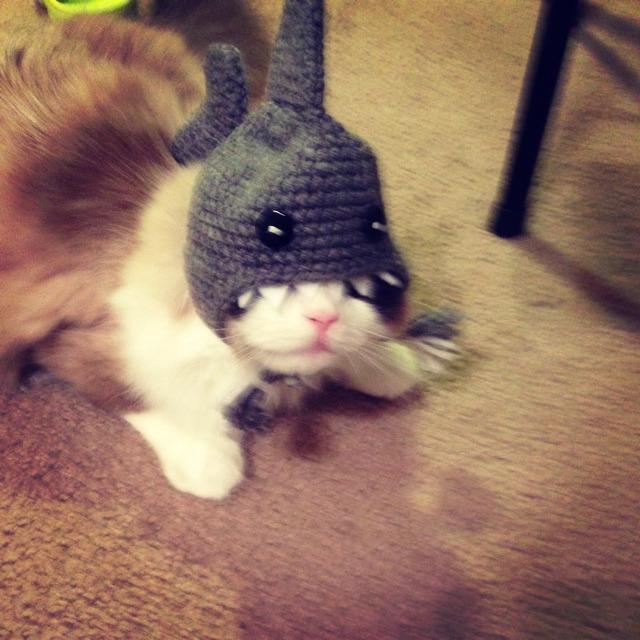 在nala cat网站上给小猫买的毛线帽子 还挺可爱的#猫奴一枚##萌宠物品