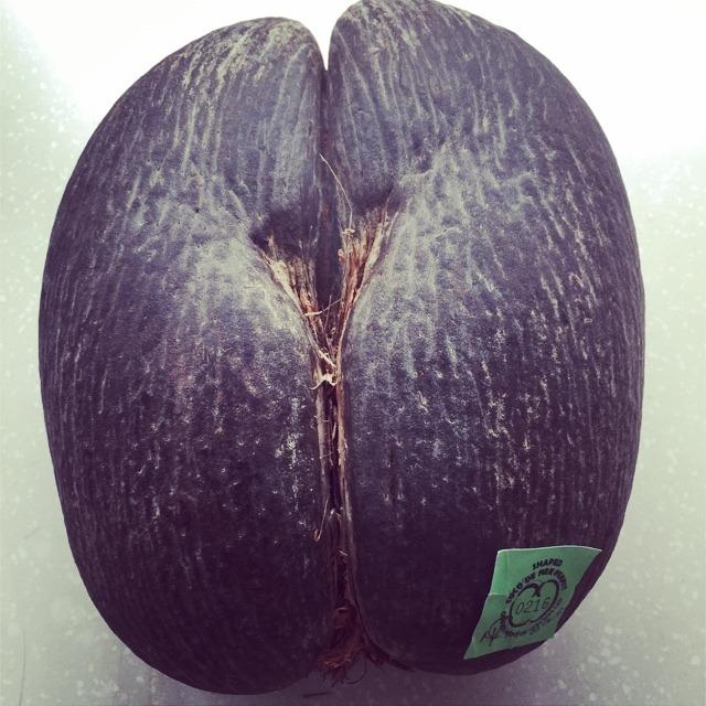 塞舌尔的屁股椰子 真像呀 世界上最大的种子 老婆大爱